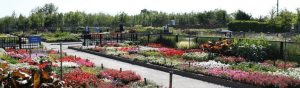 tully nurseries plant centre - banner image