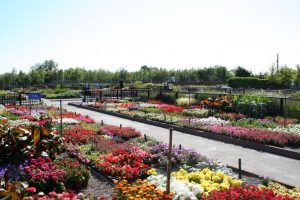tully nurseries plant centre - image