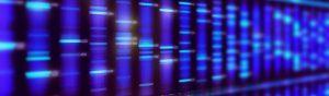 stop duplication banner - herbst software